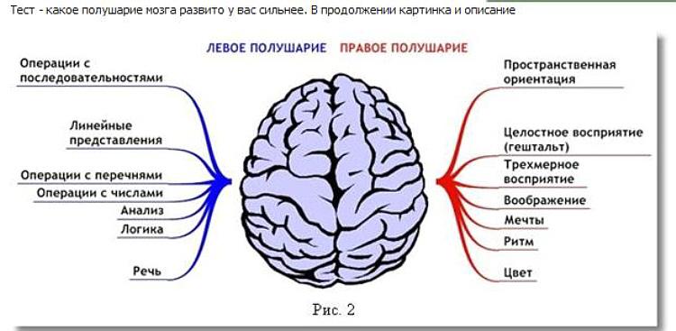 Тест - какое полушарие мозга